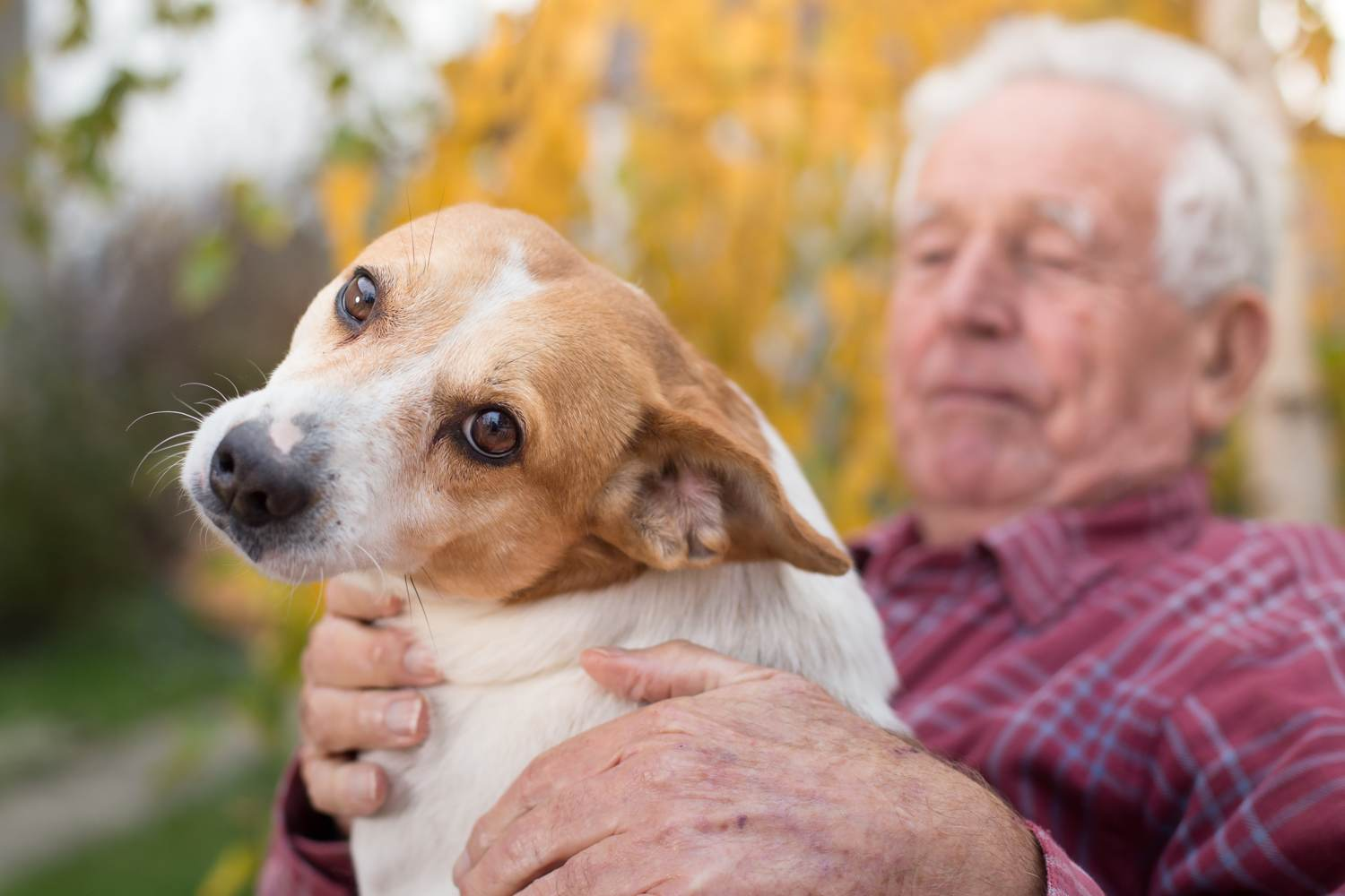 Old man with pet dog
